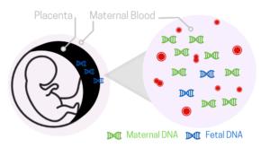 prenatal-dna-test.