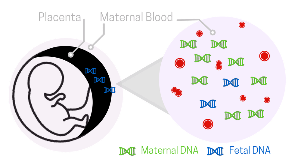 Prenatal Dna Paternity And Dna Testing Face Dna Test