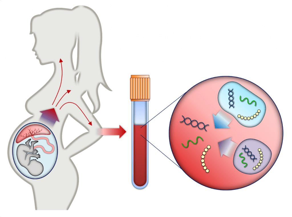 Invasive Prenatal Testing